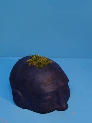tête herbe